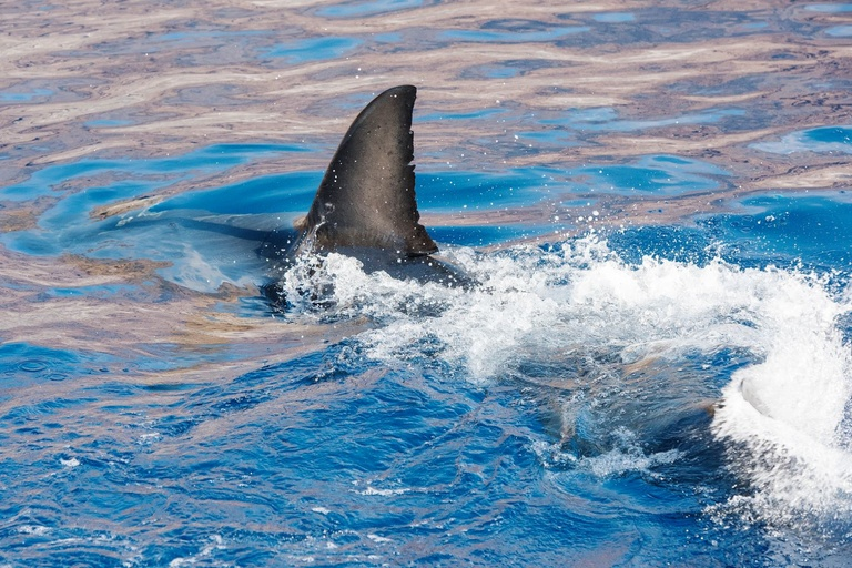 Shark week, discovery, guide