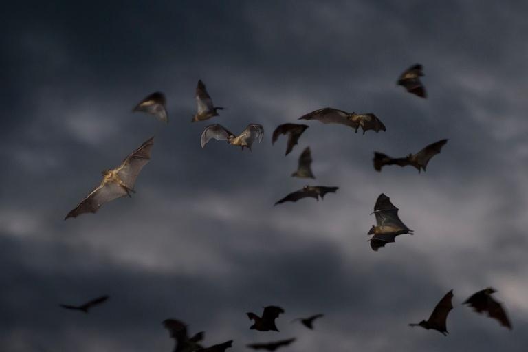 Vampire bat argentina fossils
