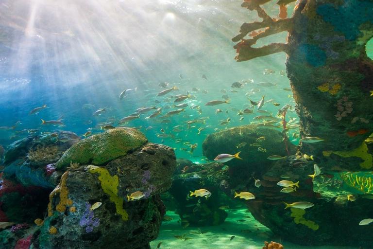 ancient fossil reef sponge