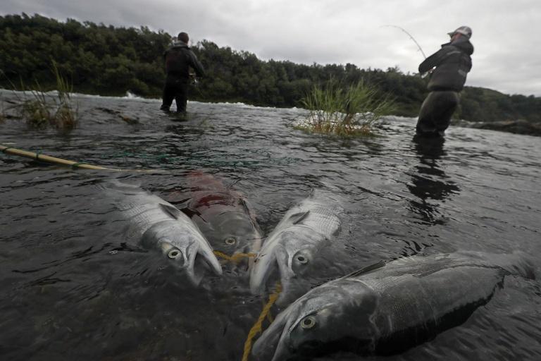 northwest fishing population decline