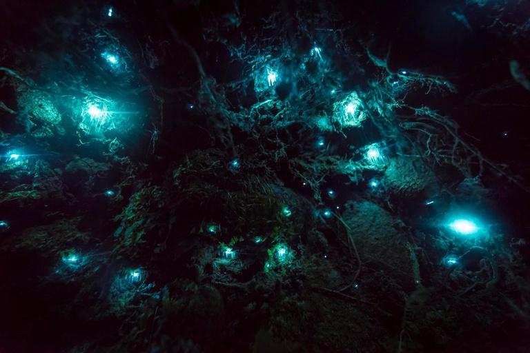 glowworms united states parks
