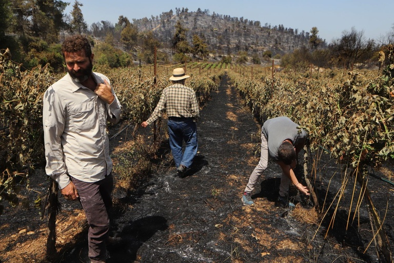 west coast winery fires