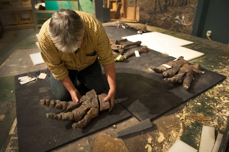 wolly mammoth breeding, extinct